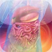 Blausen Digestive Atlas