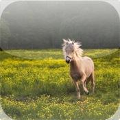 Horse Pairs