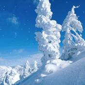 AAA Snow™
