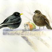 Vögel am Futterhaus (Nature-Lexicon)