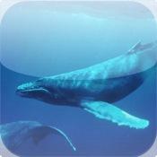 OCEANS AQUARIUM CALENDAR