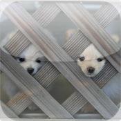 Cute Dog Puzzle Vol.1