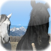 Cute Horse Puzzle Vol.1