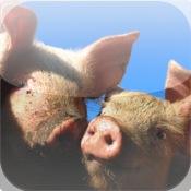 Cute Pig Puzzle Vol.1