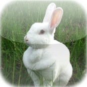Cute Rabbit Puzzle Vol.1