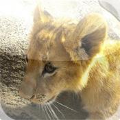 Cute Lion Puzzle Vol.1