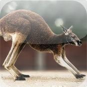 Cute Kangaroo Puzzle Vol.1