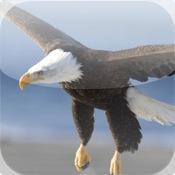 Cute Eagle Puzzle Vol.1