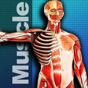 Muscle Encyclopedia