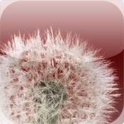 Pollenalarm