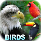 HD Birds Encyclopedia