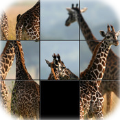 Safari Sliders