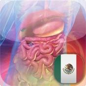 Blausen Spanish Digestive Atlas