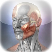 Muscle & Bone Anatomy 3D