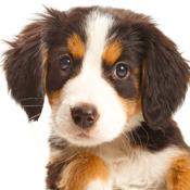 Dog Puppies HD
