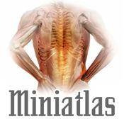 Miniatlas Diseases of the vertebral column