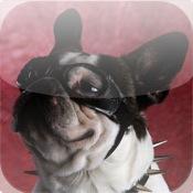 Barks! for iPad