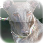 Celia Cross Greyhound Trust