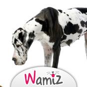 Nourrir son chien : conseils et astuces - Wamiz