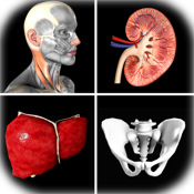 Anatomy Quiz Pro