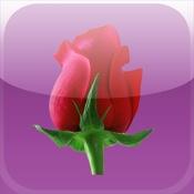 Rosenblätter (Menstruationskalender)