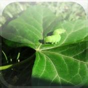 Silkworm 3D