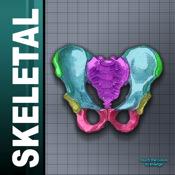 Color Skeletal System 1.1.5