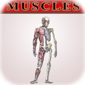 Bryan Edwards Muscles Flash Cards