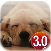 Daily Dog 3.0