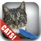 Twitkitteh: Cat Twitter