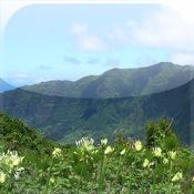 iViews - Madeira Islands