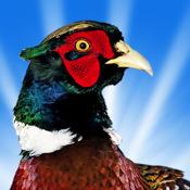 Pheasant Hunt 3D