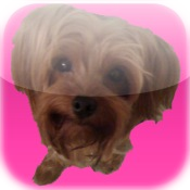 Pet My Puppy