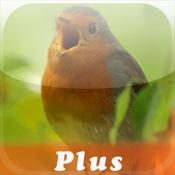 Nature Lexicon: Vogelstimmen-Trainer Plus