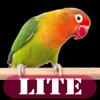 Amusing Animals Lite