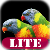 Singing Birds LITE