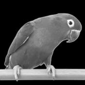 Черно-Белая Камера