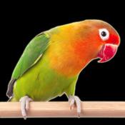 Говорящие Животные