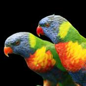 Поющие Пташки