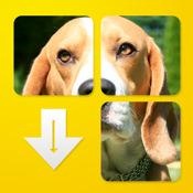 DogPuzzle